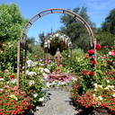 Rose Garden June 18 photo album thumbnail 12